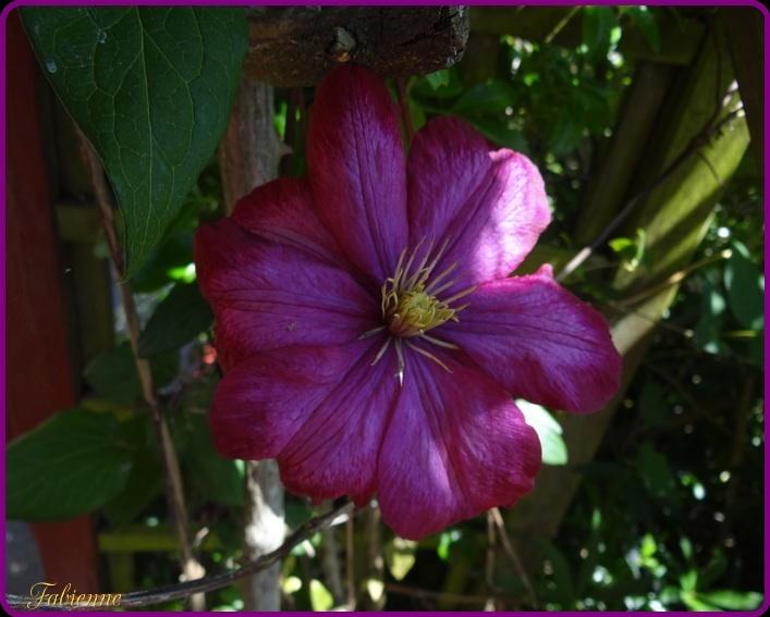 Un petit coin fleuri en BRETAGNE ... Jpg10