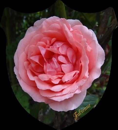 Un petit coin fleuri en BRETAGNE ... Jyyrpp10