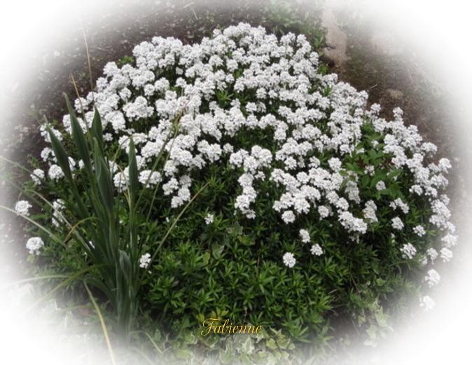 Un petit coin fleuri en BRETAGNE ... Rnfpuc10