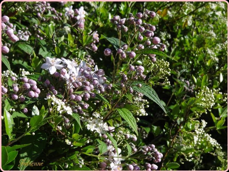 Un petit coin fleuri en BRETAGNE ... Tqduun10