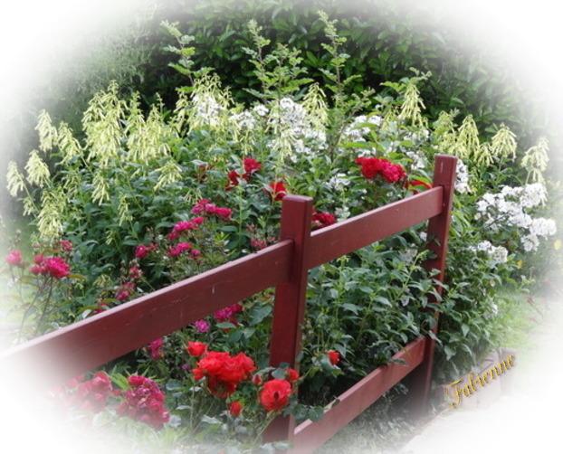 Un petit coin fleuri en BRETAGNE ... Ua1pvm10