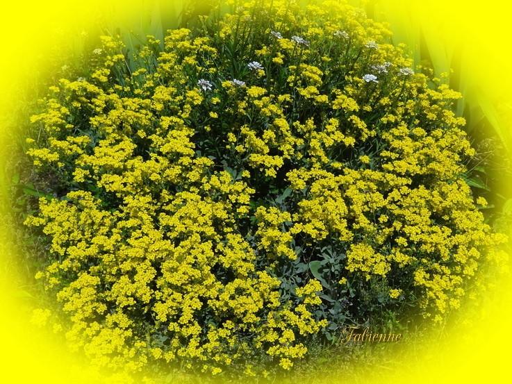 Un petit coin fleuri en BRETAGNE ... Ubdpum10