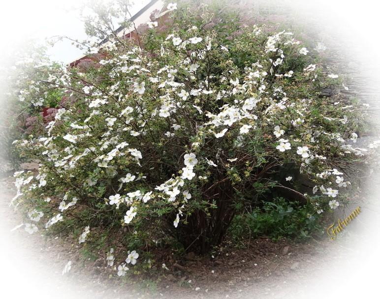 Un petit coin fleuri en BRETAGNE ... Ukcd0c10