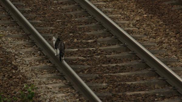 Tout sur le rail Chat_v10