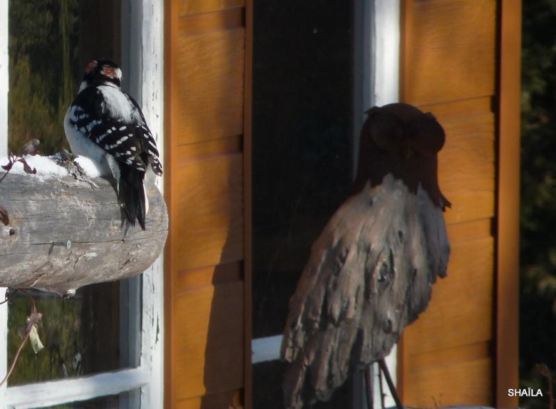 Oiseaux  2014 /2015 P1540313