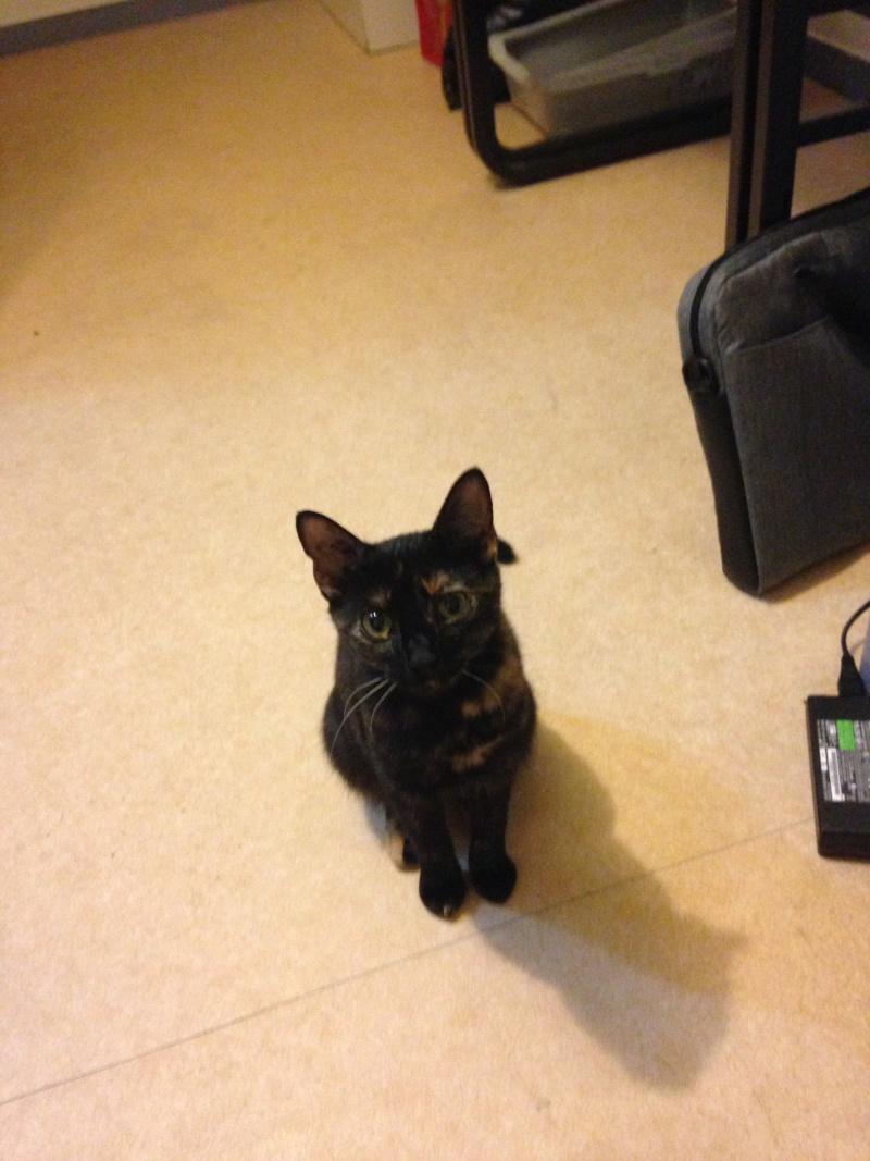 Les chats à adopter qui s'entendent avec les chiens Img_1410