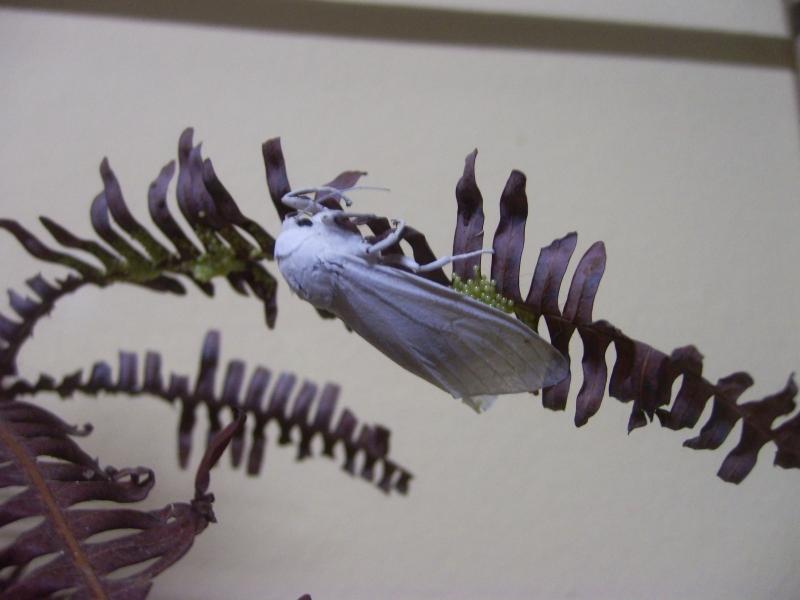 """Papillons de """" chez moi """" Pic_5010"""