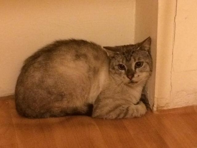 Photos des chats sauvés, avant/après - Page 6 13986310