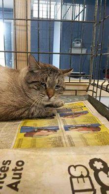 Photos des chats sauvés, avant/après - Page 4 15255910
