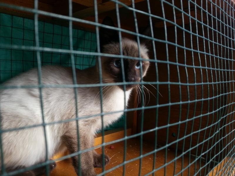 Photos des chats sauvés, avant/après - Page 6 20130910