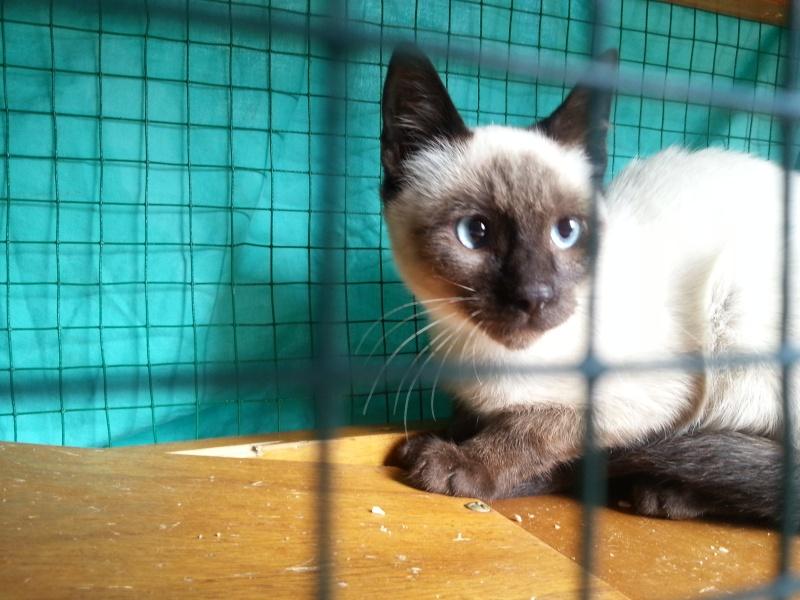 Photos des chats sauvés, avant/après - Page 6 20130911