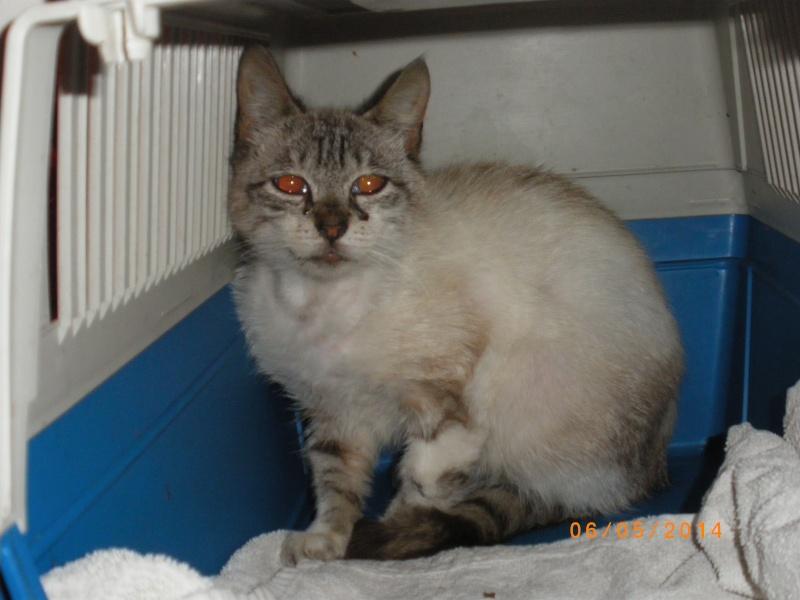 Photos des chats sauvés, avant/après - Page 4 Imgp1210