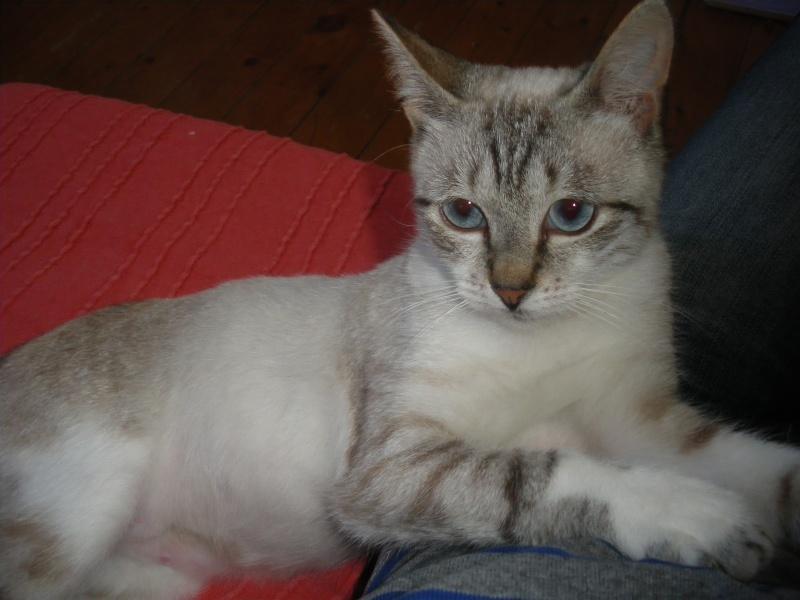 Photos des chats sauvés, avant/après - Page 4 Imgp1310