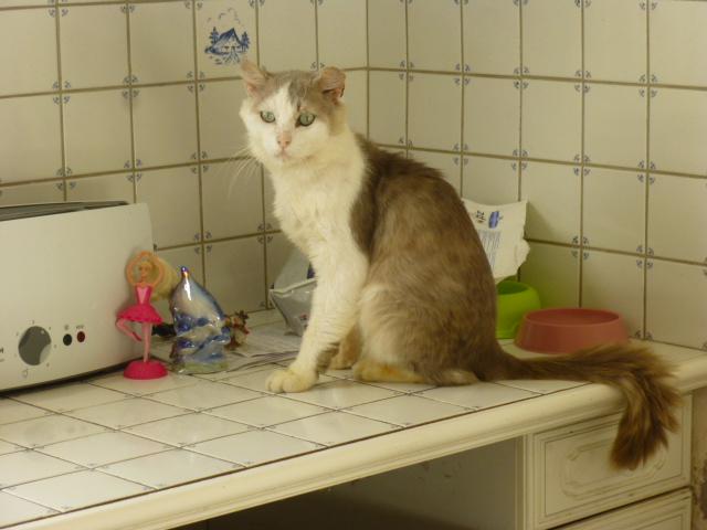 Photos des chats sauvés, avant/après - Page 6 P1030810