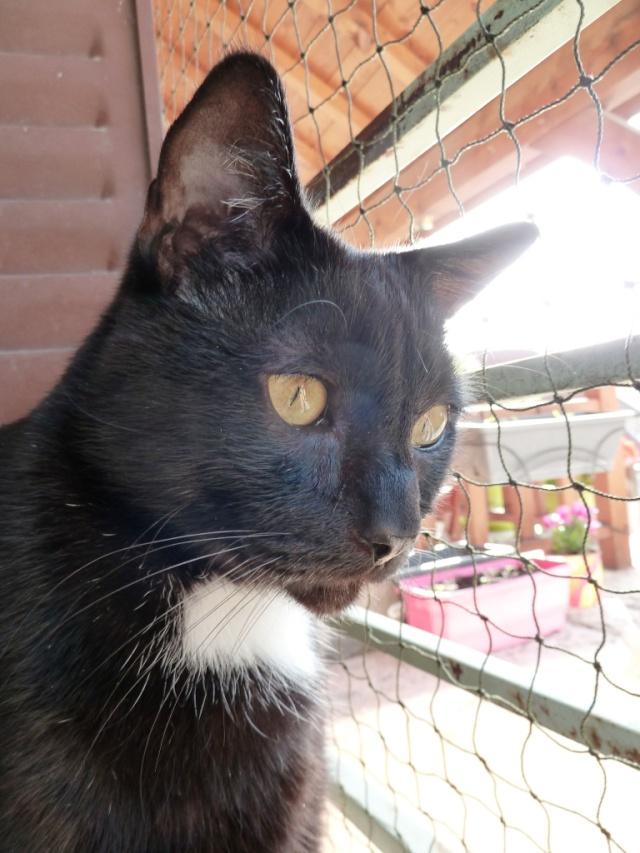 Photos des chats sauvés, avant/après - Page 4 P1210710
