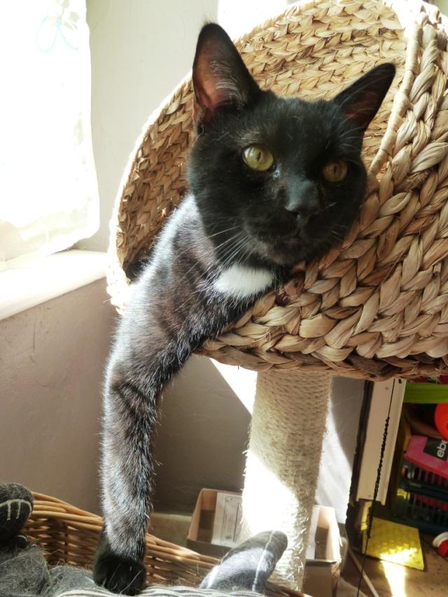 Photos des chats sauvés, avant/après - Page 4 P1210910