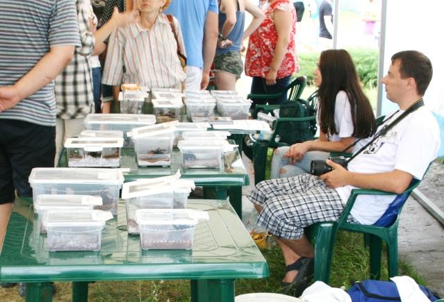Выставка Belarussian Tarantula Society (!!!) Img_2310