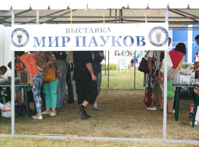 Выставка Belarussian Tarantula Society (!!!) Img_2410