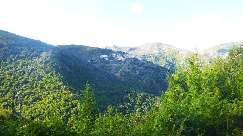 Golo (Corsica) P1010311