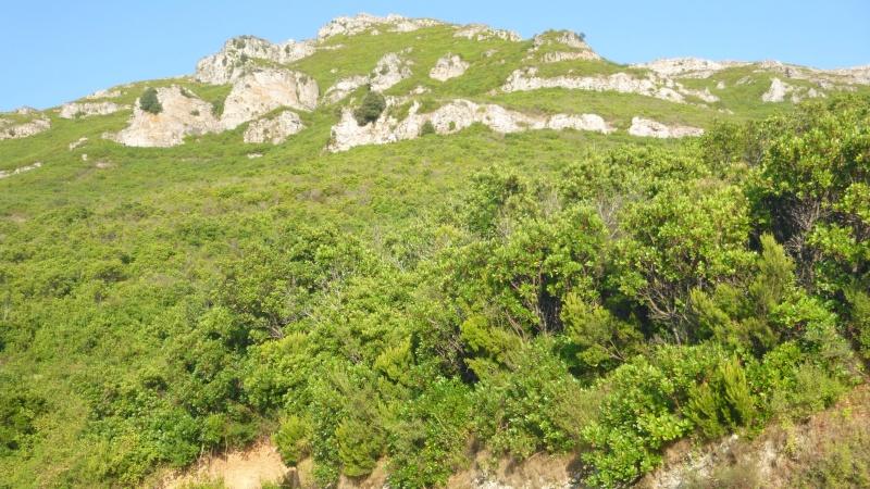 Golo (Corsica) P1010314