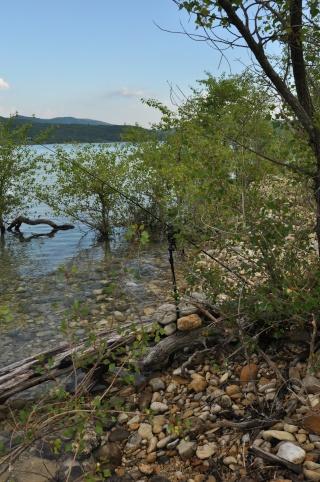 Grand lac: en immersion dans le canard wc du sud est Dsc_2512