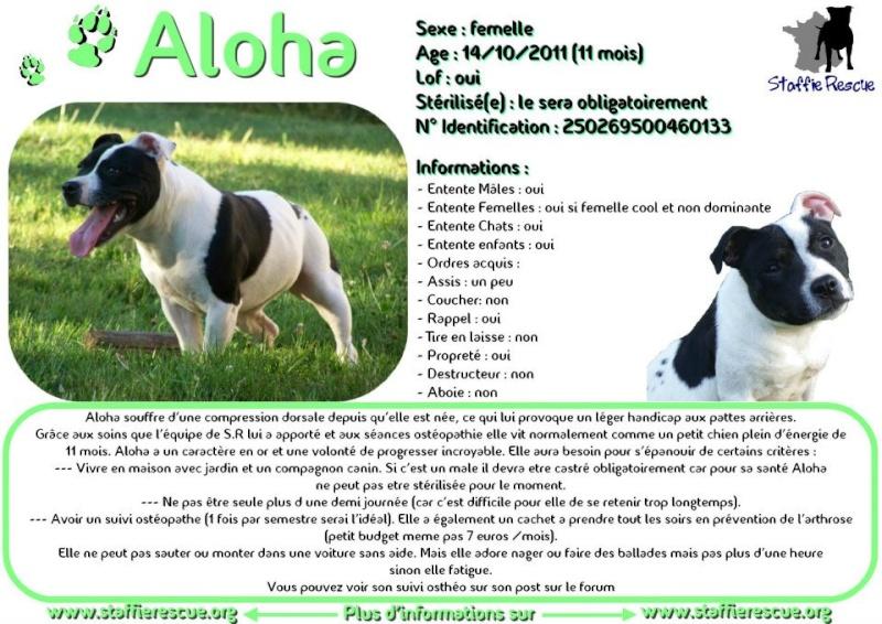 à Adopter chienne Aloha - 16 mois [Adoptée] 22441010