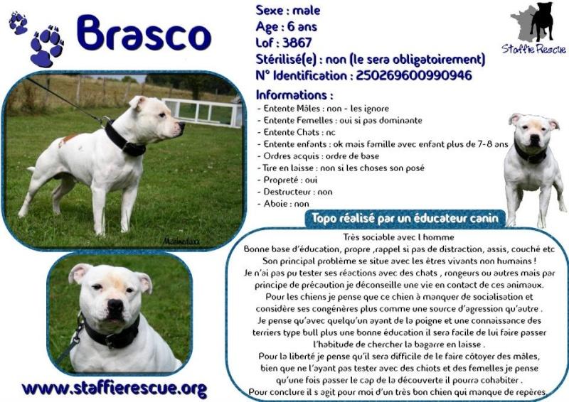 à Adopter chien Brasco - 5 ans [Adopté] 53885810