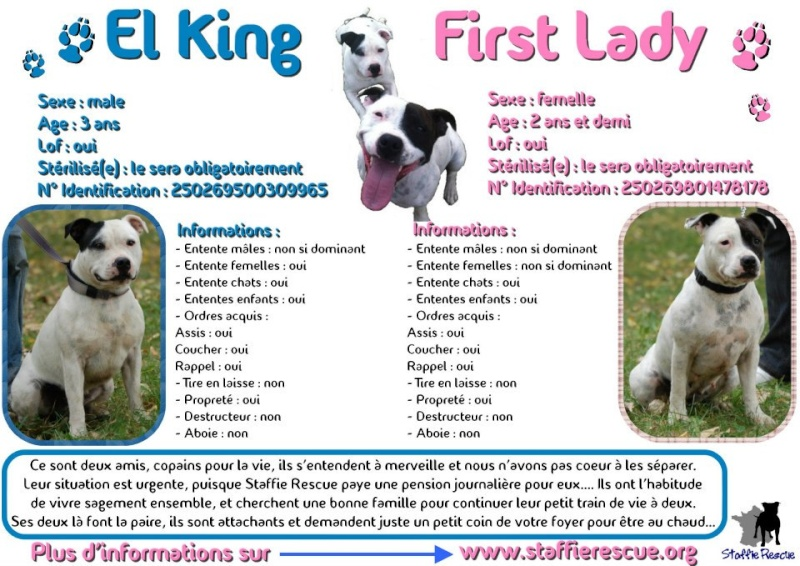 à Adopter deux chiens El King & First Lady [Adoptés] 58777_10