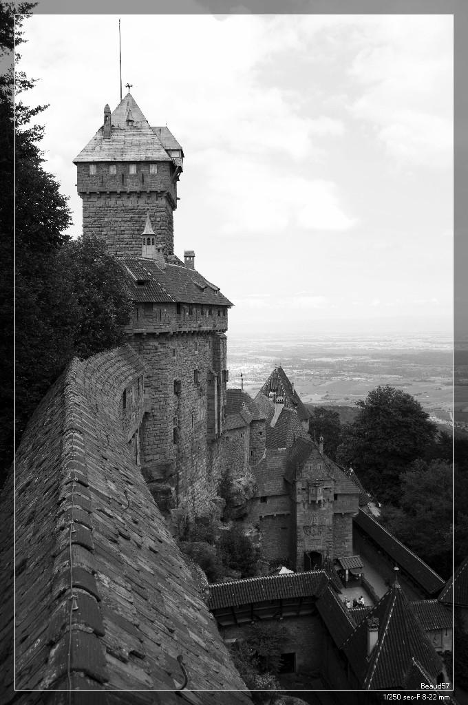 Concours des mois de juillet/ août 2012. Thème : Le noir et blanc  Chatea10