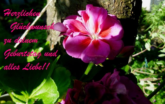 Happy Birthday rubenswoman P1000512