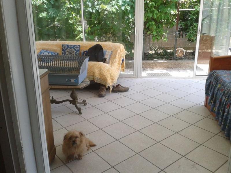 Yvona, née en 2011, petit modèle, chienne super sage 10407910