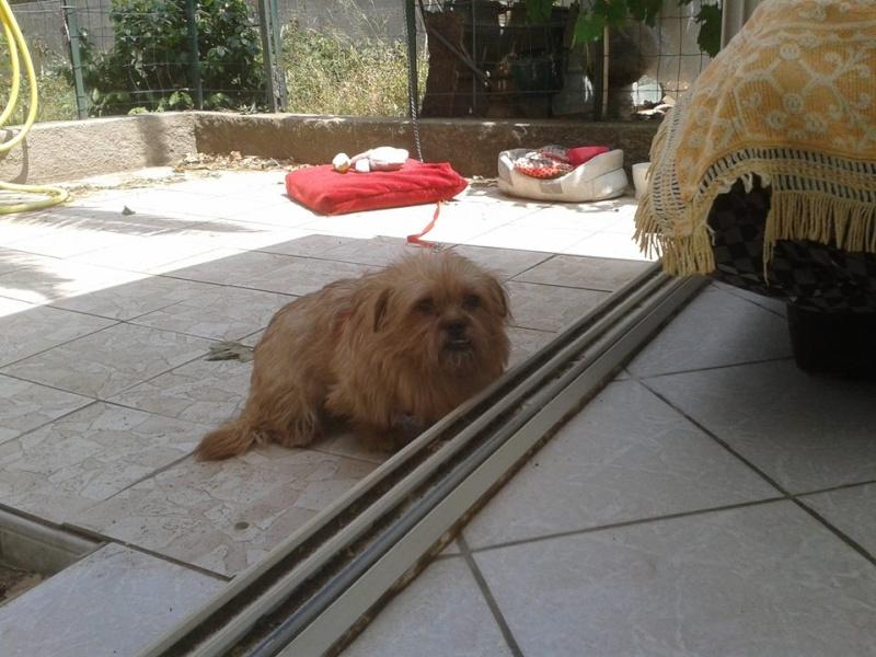 Yvona, née en 2011, petit modèle, chienne super sage 10500510