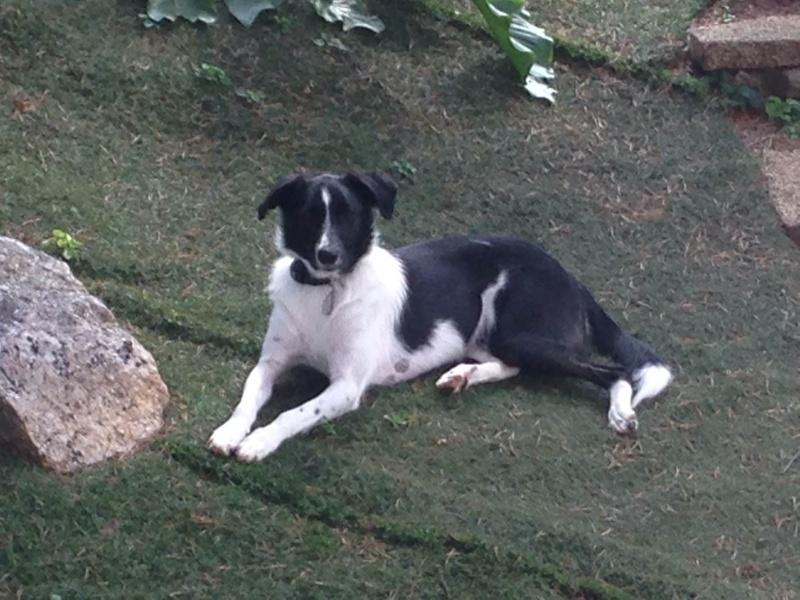 Pepita, née en septembre 2012 Img_0010