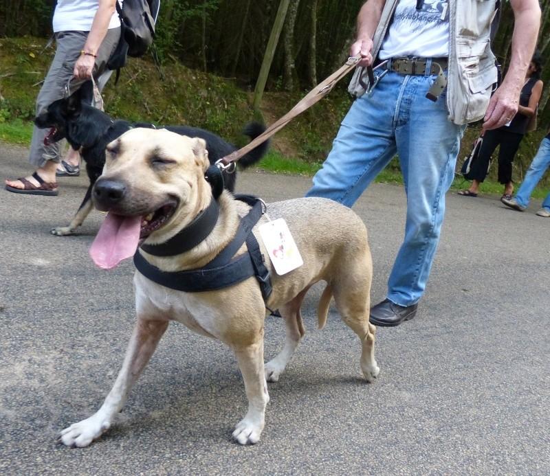 Lila, adorable chienne croisée, née en octobre 2011 P1110510