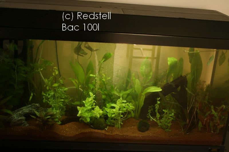 Aquarium en cours 100l Img_9410