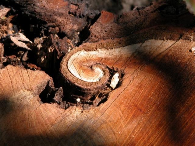 La spirale, mouvement de vie. - Page 4 Bois10