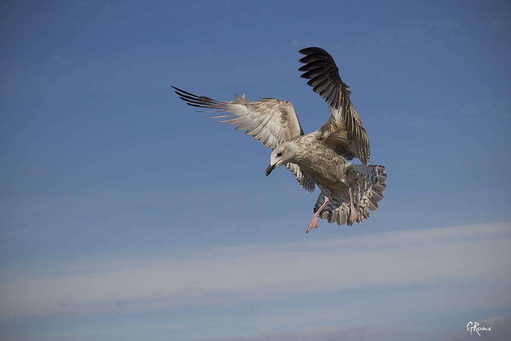 Animaux, oiseaux... etc. tout simplement ! - Page 4 Le_goe11