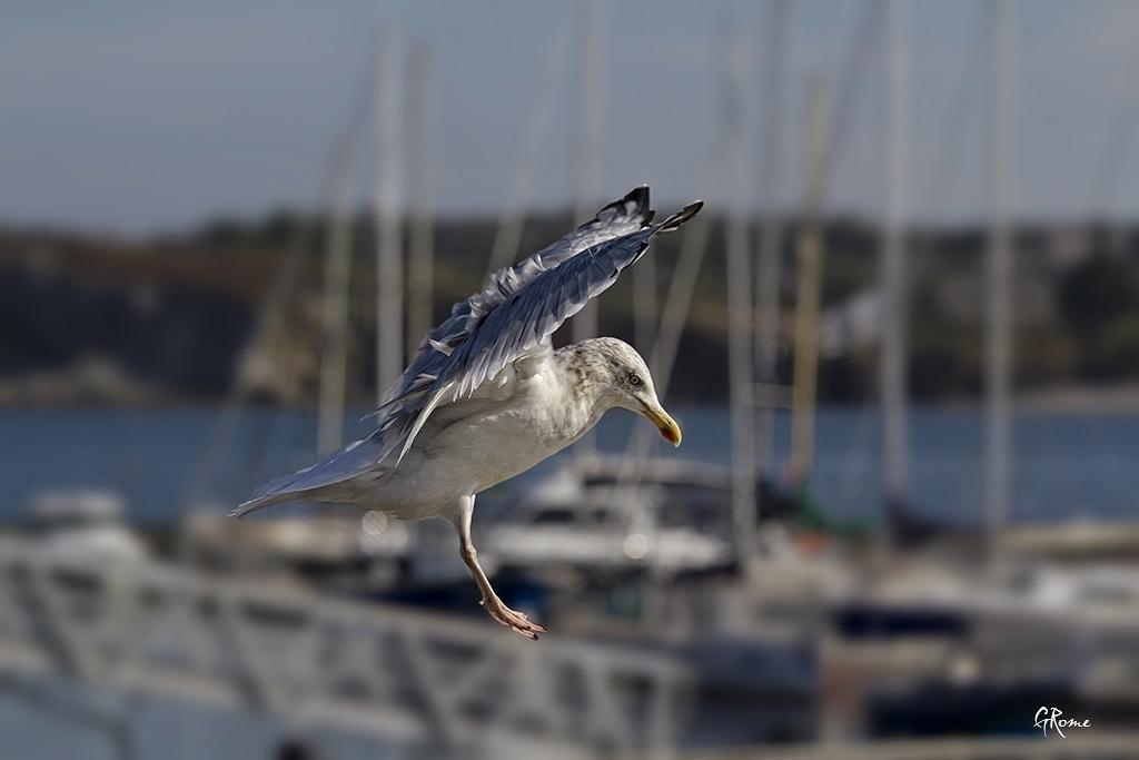 Animaux, oiseaux... etc. tout simplement ! - Page 4 Le_goe12