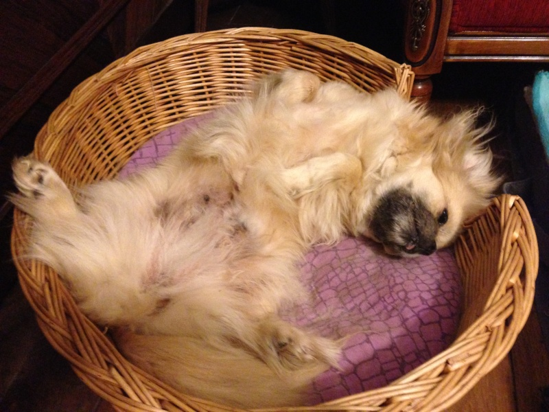 Midsy ma petite merveille - Page 2 Img_4118