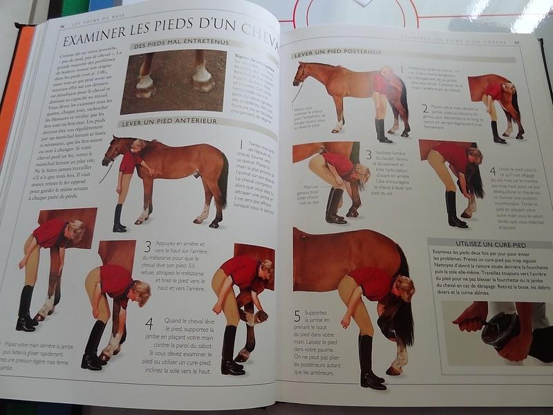 Soins au chevaux Dsc04211