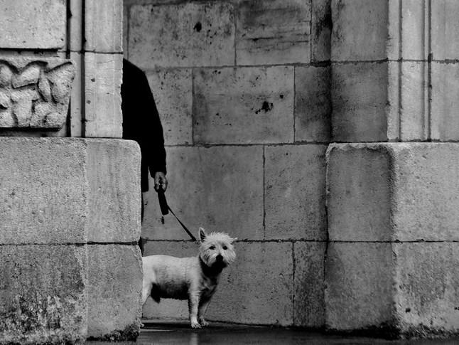 le chien ( dans la rue ) Img_2110