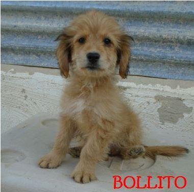 BOLLITO - FRERE DE BOLLICAO Bollit10