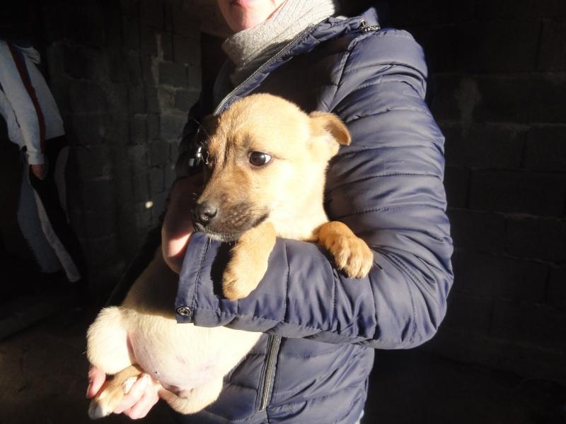 Biscotte, petit mâle, ne en octobre 2014, très sociable Dsc01115