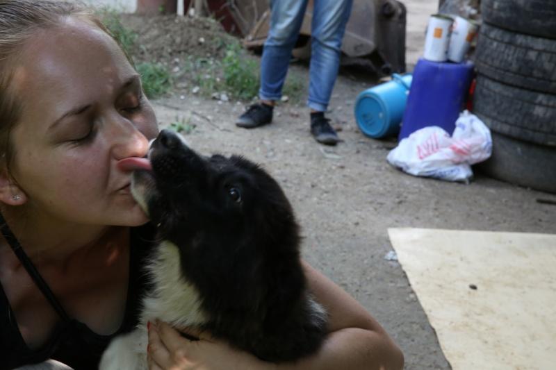 Yoko, petite puce de 3 mois, bébé très sociable - Adoptée Hx9a1413