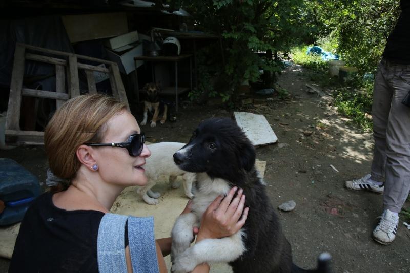 Yoko, petite puce de 3 mois, bébé très sociable - Adoptée Hx9a1415