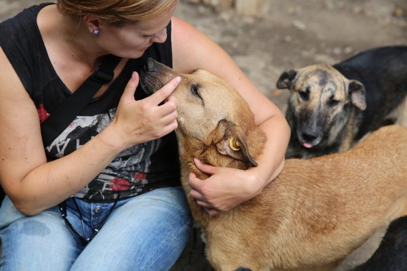 Tzupy, chien de notre quartier, mâle très sociable, né en 2009. Hx9a1510