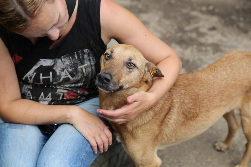 Tzupy, chien de notre quartier, mâle très sociable, né en 2009. Hx9a1513