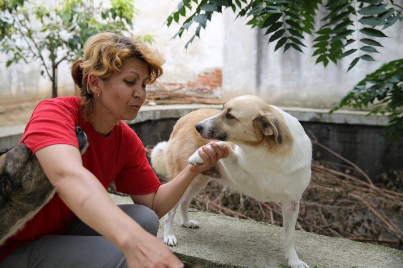 Murmurica, sauvetage de Sanda, chienne née en 2011 Hx9a2716