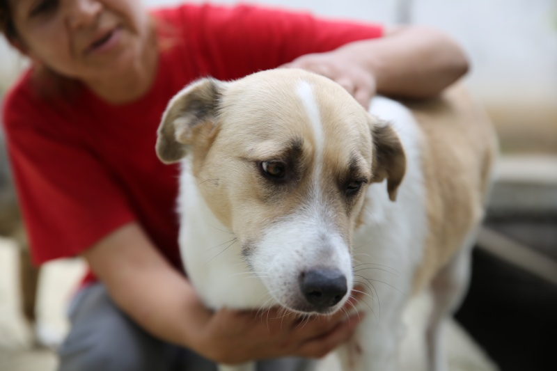 Murmurica, sauvetage de Sanda, chienne née en 2011 Hx9a2718