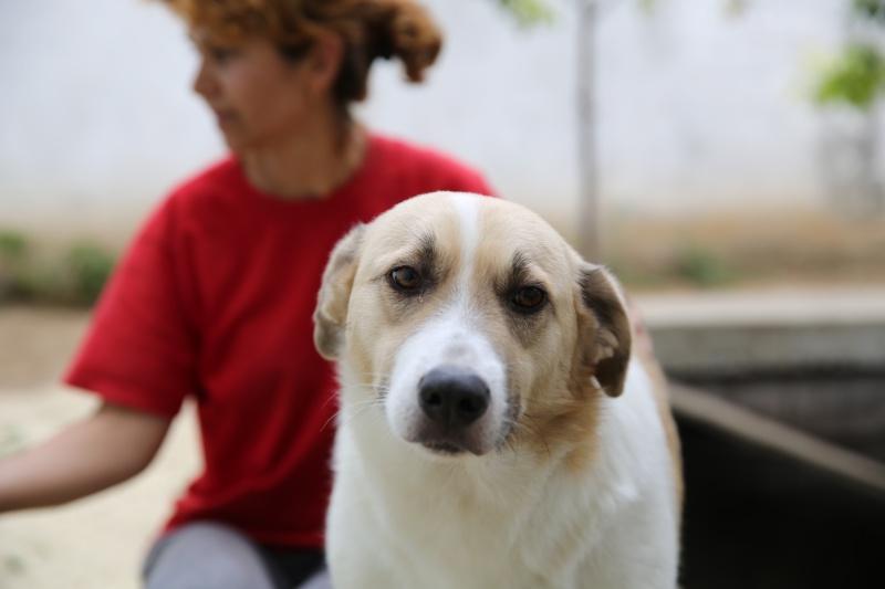 Murmurica, sauvetage de Sanda, chienne née en 2011 Hx9a2810